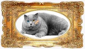 Life 1 framed